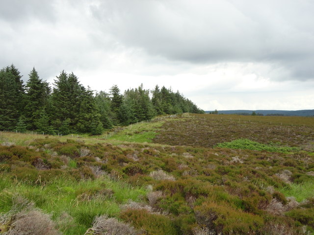Forest and heather above the Ross road
