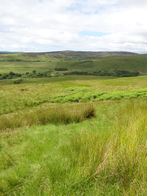 Rushes and ferns above the Ross