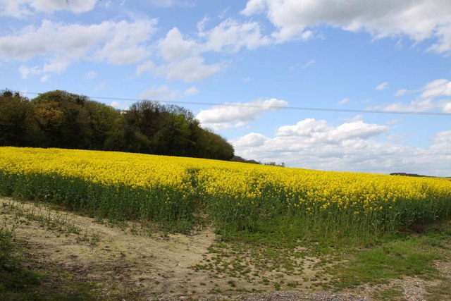 A field of rape on Kingstanding Hill