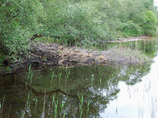 Beaver lodge on Lochan Buic