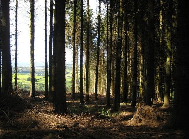 Dark Woodland Emma White Geograph Britain And Ireland