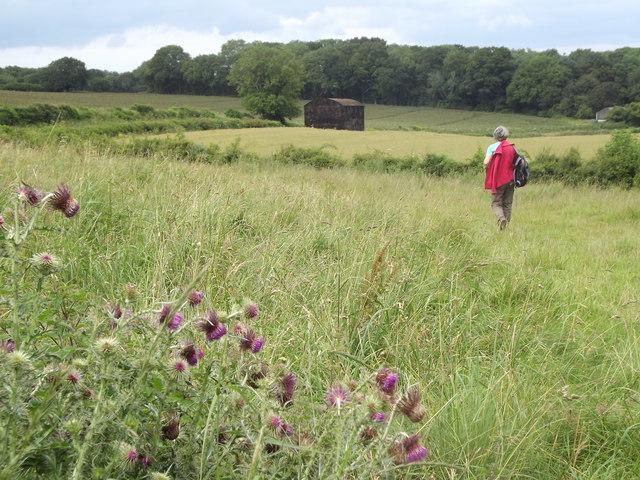 Chalk Grassland Above Tichborne
