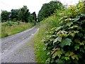 H5114 : Road at Lisboduff by Kenneth  Allen