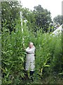 SN1610 : 10ft Tall Teasels in Llanteg by welshbabe