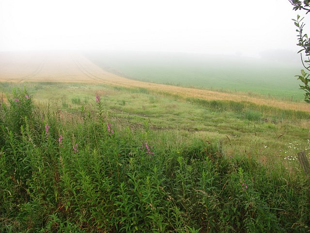 Barley near Newmachar