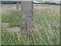 SE1004 : Benchmark on a post on the east side of Woodhead Road by John Slater