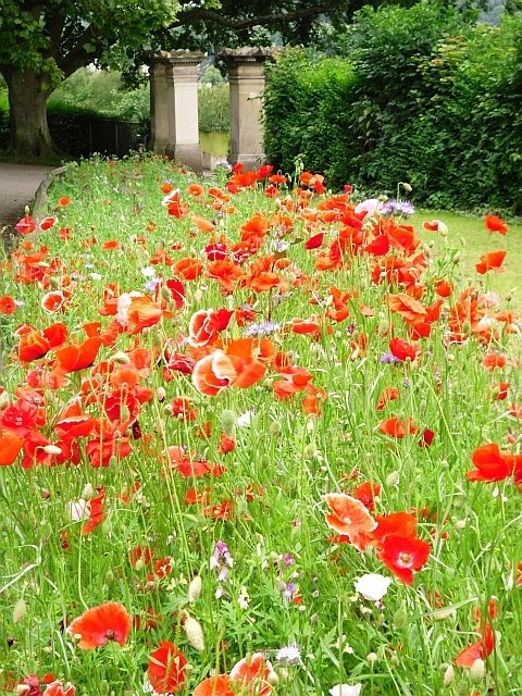 Colourful flower border, Alexandra Park