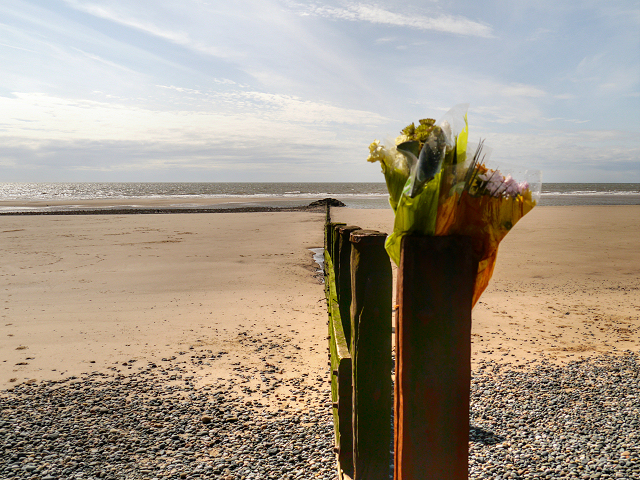 Flowers and Groyne