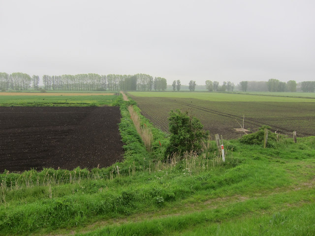 Bridge Fen