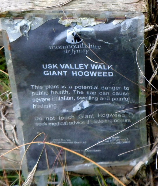 Beware Of Giant Hogweed On The Usk Valley Walk