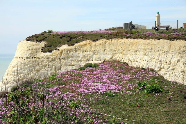 Thrift on the clifftop