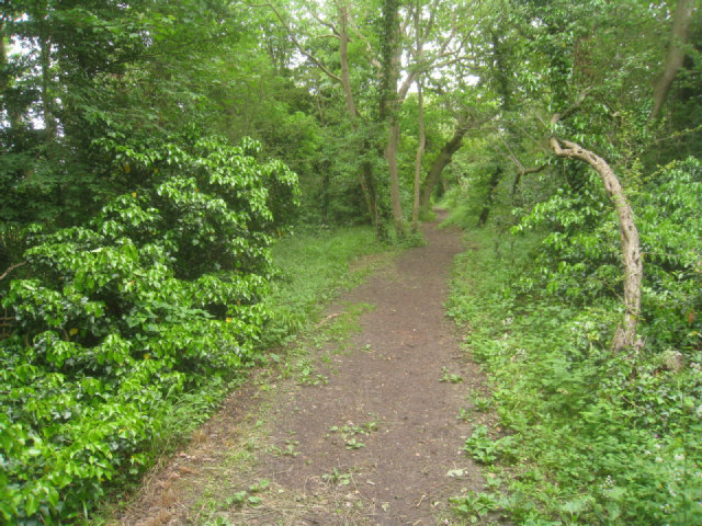 Footpath across Chapel Hill