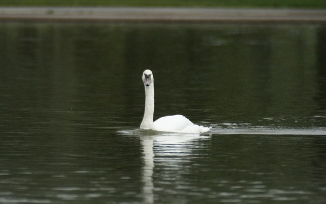 Can Swan Portishead