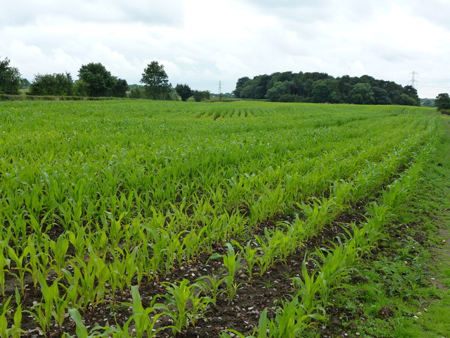Newly planted crops north-east of Garstang