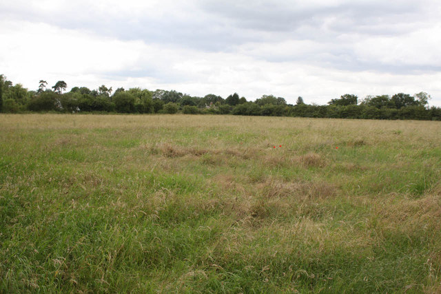 Field near Thorney