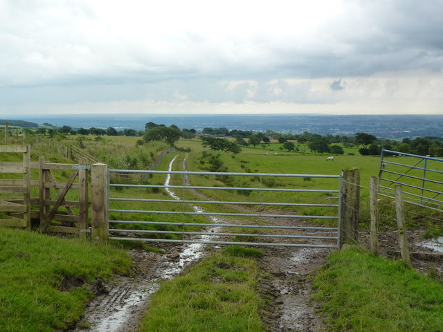 Gate and track on Barnacre Moor