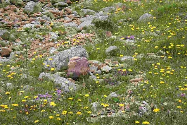 Limestone flora, Easegill