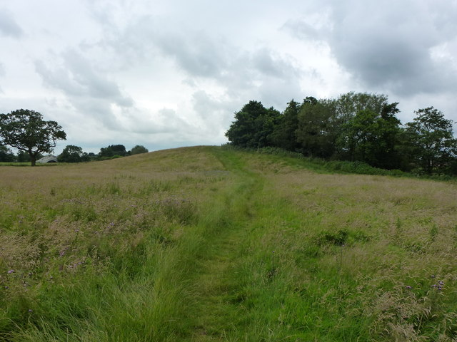 Broom Hill