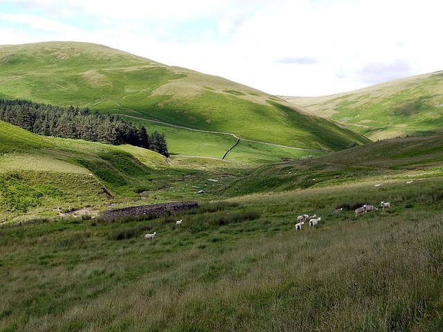 Sheepfold above Sourhope Burn
