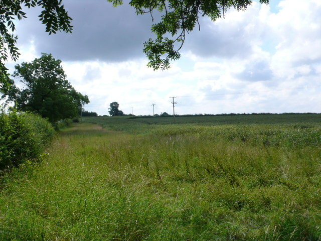 Beanfield near Newfoundland Wood