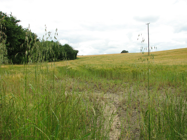 Field-woodland boundary by Pearman's Hill