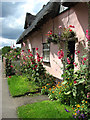 TL9748 : Colourful cottage front, Chelsworth : Week 30