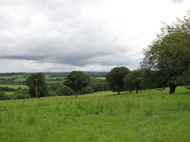 Pasture and trees near Ballyphilip