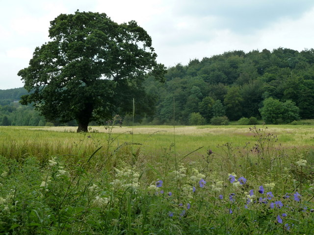 Field and view to Dog Kennel Wood