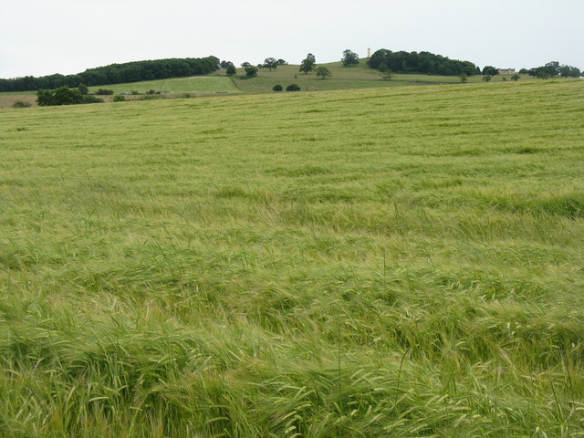 Barley at Blackness
