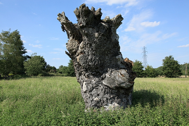 Ancient gnarled tree stump