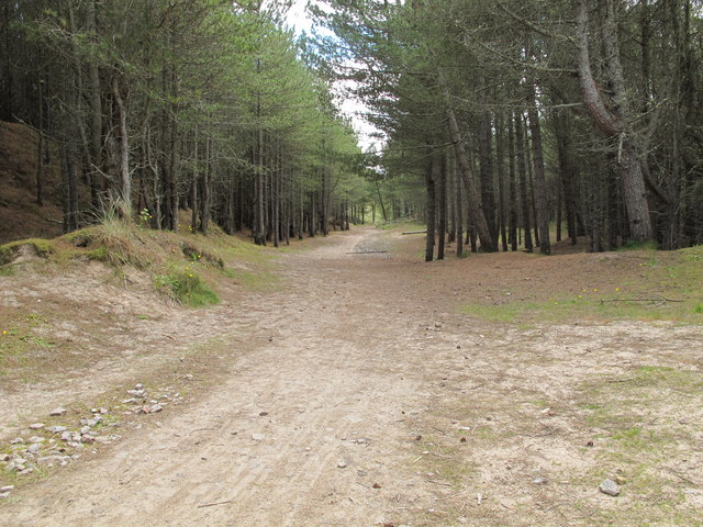 Track in Roseisle Forest