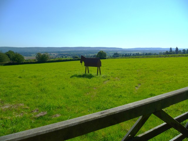 Pony in paddock with South Downs backdrop