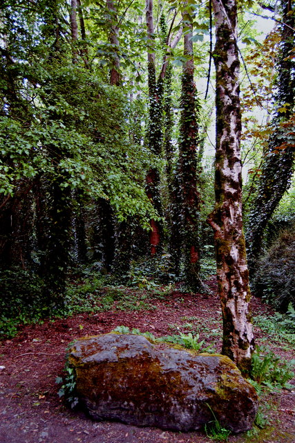 Bunratty Park - East of Site #19 - Footpath into Woods