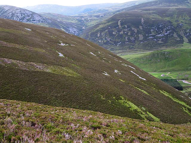 Heather hillside above Baddoch