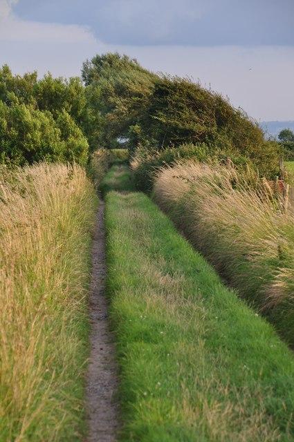 Sedgemoor : Grassy Footpath