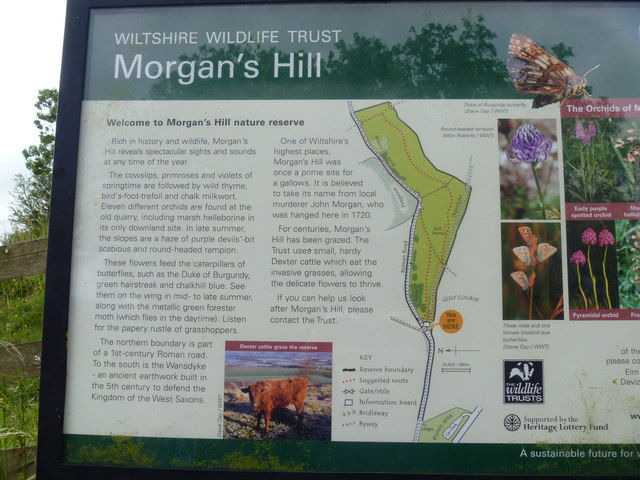 Morgan's Hill [2]