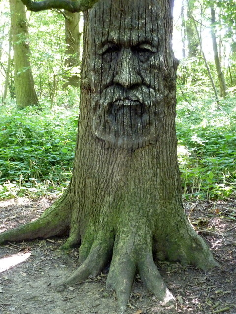 Tree carving in druidstone park blean pam fray