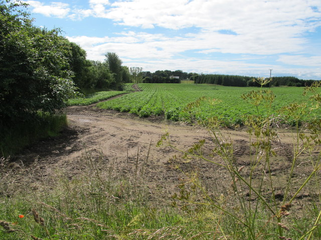 Field at Bruntlands