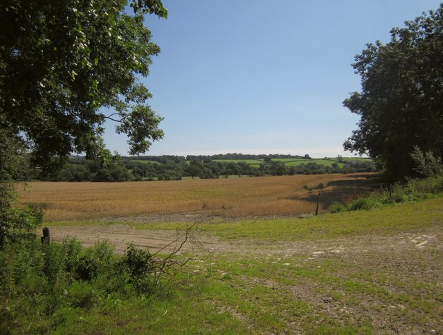 Field in Whitelake valley