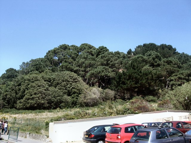 Trees at Durley Chine