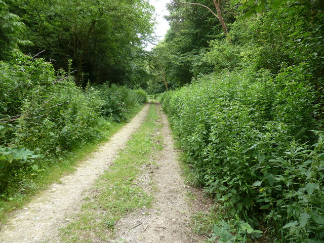 Bridleway descending to Charleston Bottom