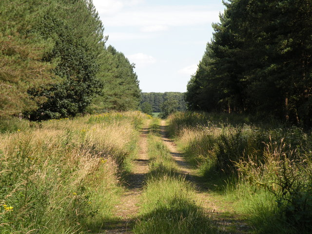 Track through Ten Acre Plantation