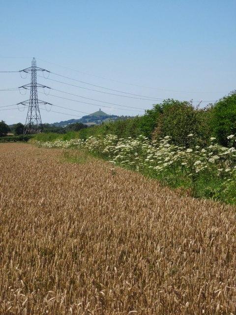 Field boundary, Pilton Park