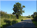 SU9173 : Hedgerow oak, Crouch Lane by Alan Hunt