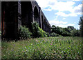 SJ9093 : River Tame Viaduct by Stephen Burton