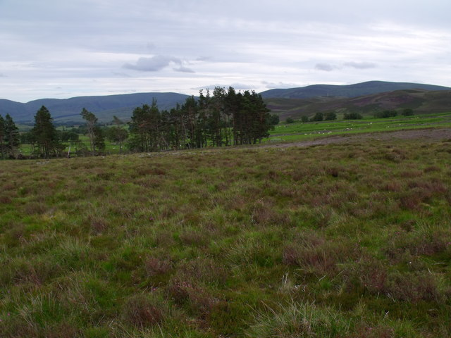 West end of Arsallary forest strip above Glen Esk in Angus