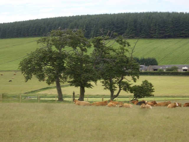 View of Wester Leochel