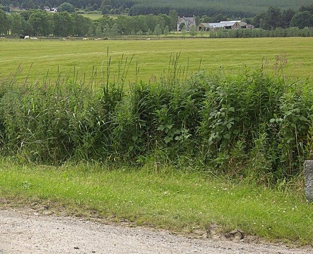 Mains of Hillhead