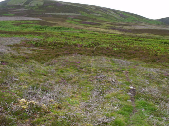 Sheep-path south of Burn of Kirny near Glen Esk in Angus
