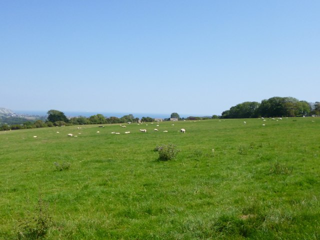 Langton Matravers, sheep grazing